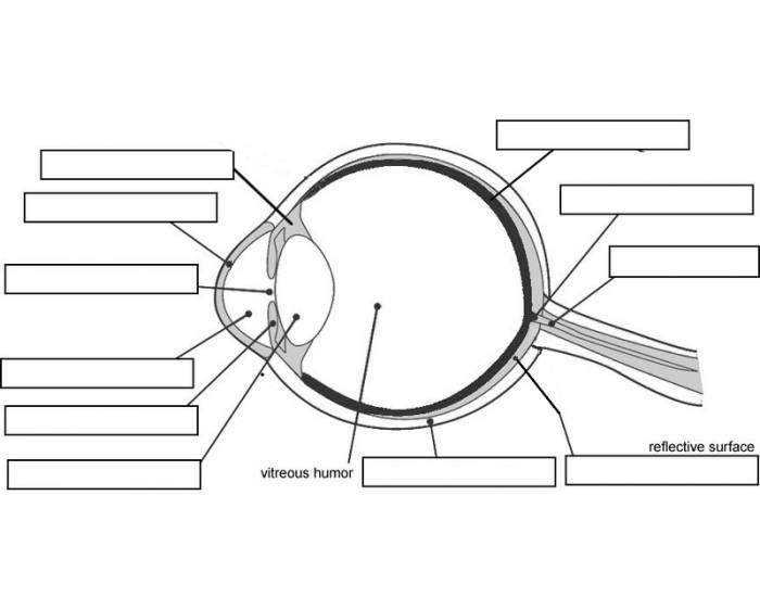 wb_2248] eye diagram quizzes download diagram label eye diagram ks2  groa.tool.mohammedshrine.org
