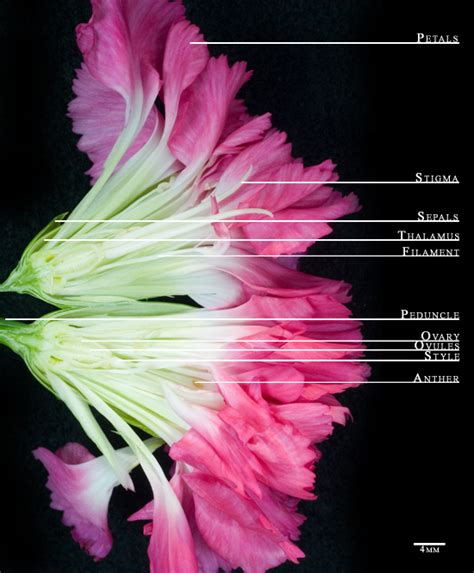Fine Carnation Diagram Pdf Epub Library Wiring Cloud Lukepaidewilluminateatxorg