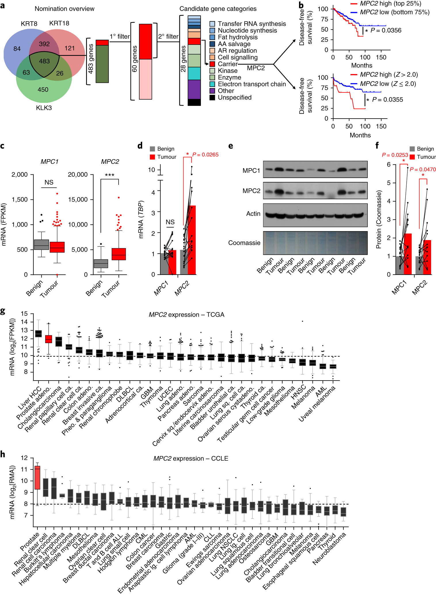 Phenomenal Mitochondrial Pyruvate Import Is A Metabolic Vulnerability In Wiring Cloud Hemtshollocom