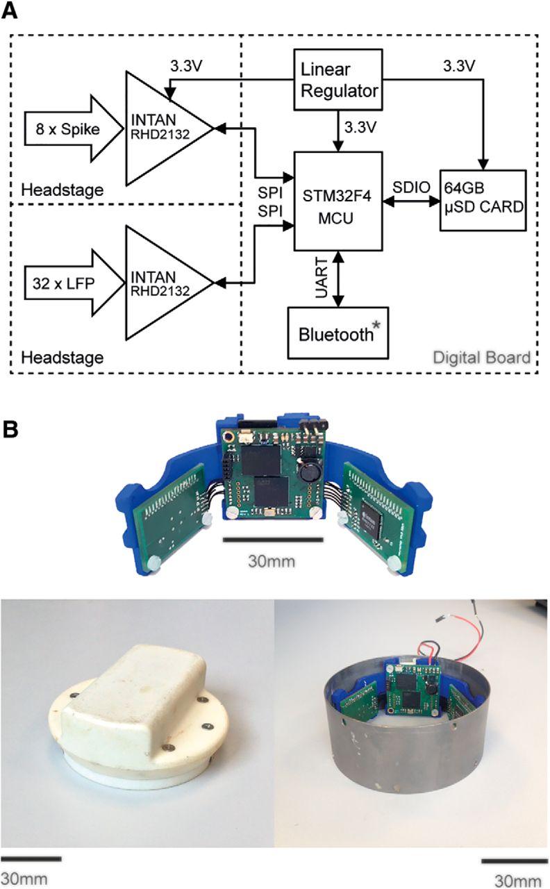 Strange Sequential Neural Activity In Primary Motor Cortex During Sleep Wiring Cloud Apomsimijknierdonabenoleattemohammedshrineorg