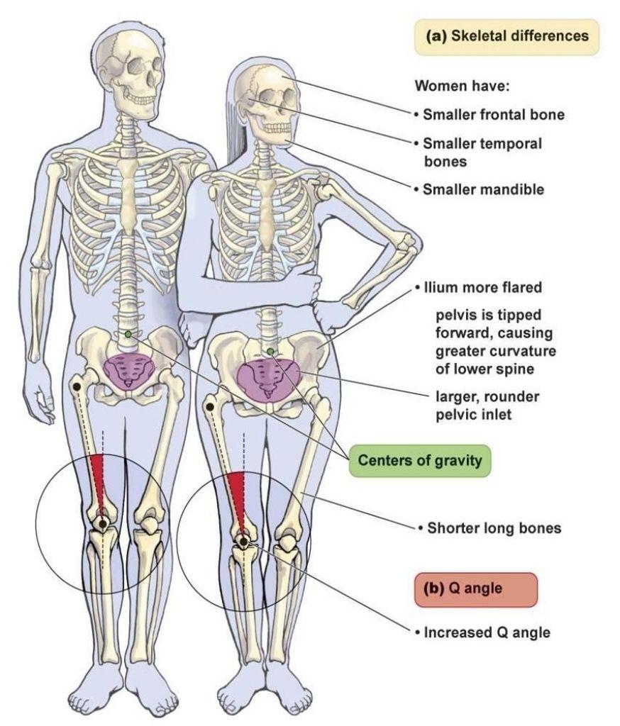 diagram of male skeleton bs 4513  diagram of male skeleton wiring diagram  diagram of male skeleton wiring diagram