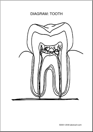 Phenomenal Diagram Tooth Unlabeled Label The Parts Of The Tooth Science Wiring Cloud Waroletkolfr09Org