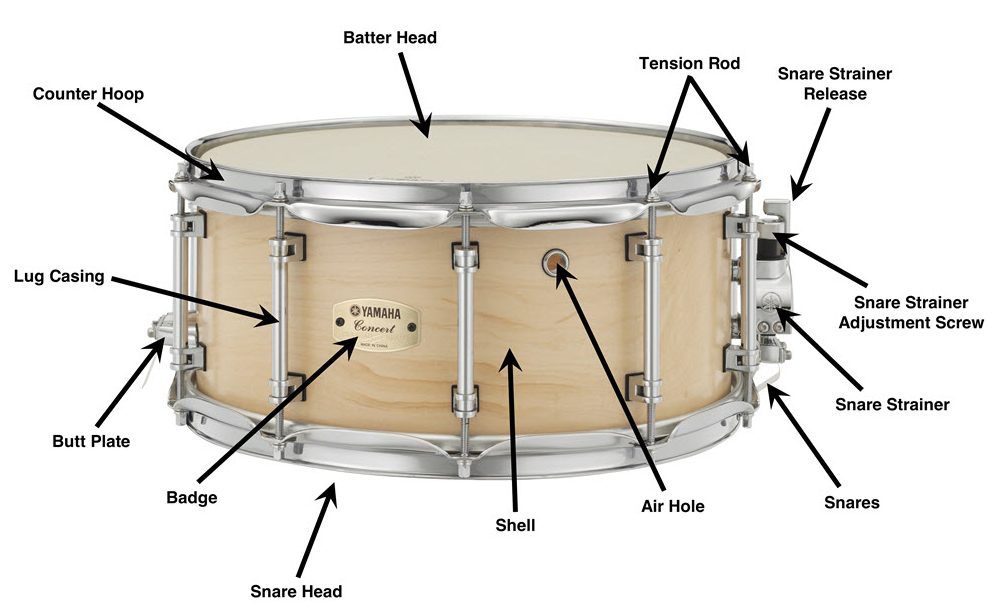 Cool Anatomy Of A Snare Drum Wiring Cloud Rineaidewilluminateatxorg