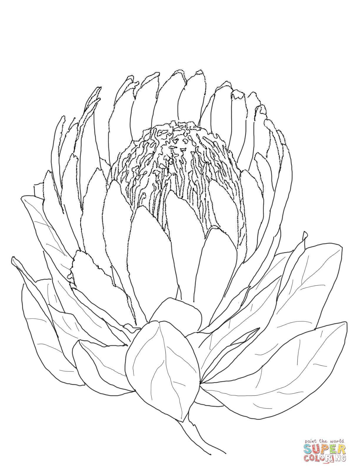 Terrific Sweet Pea Flower Sketch Auto Electrical Wiring Diagram Wiring Cloud Onicaalyptbenolwigegmohammedshrineorg