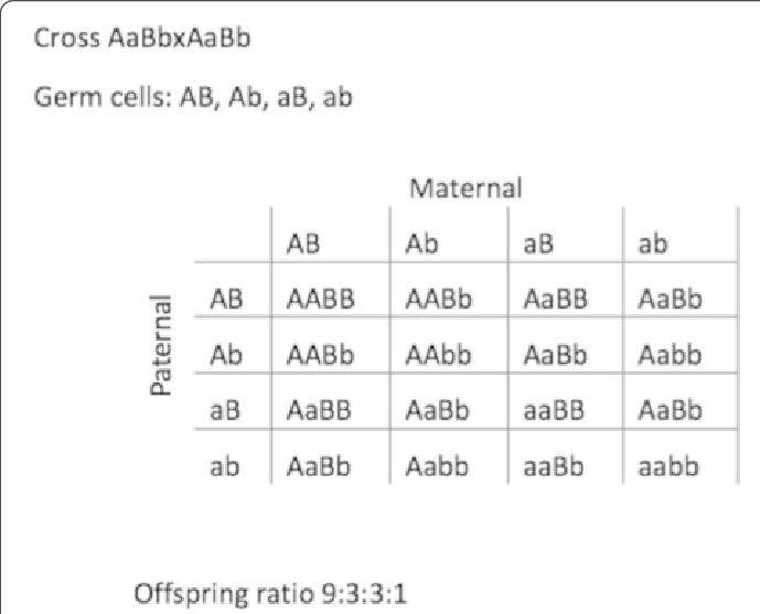 Hm 9959 Punnett Square Diagram Free Diagram